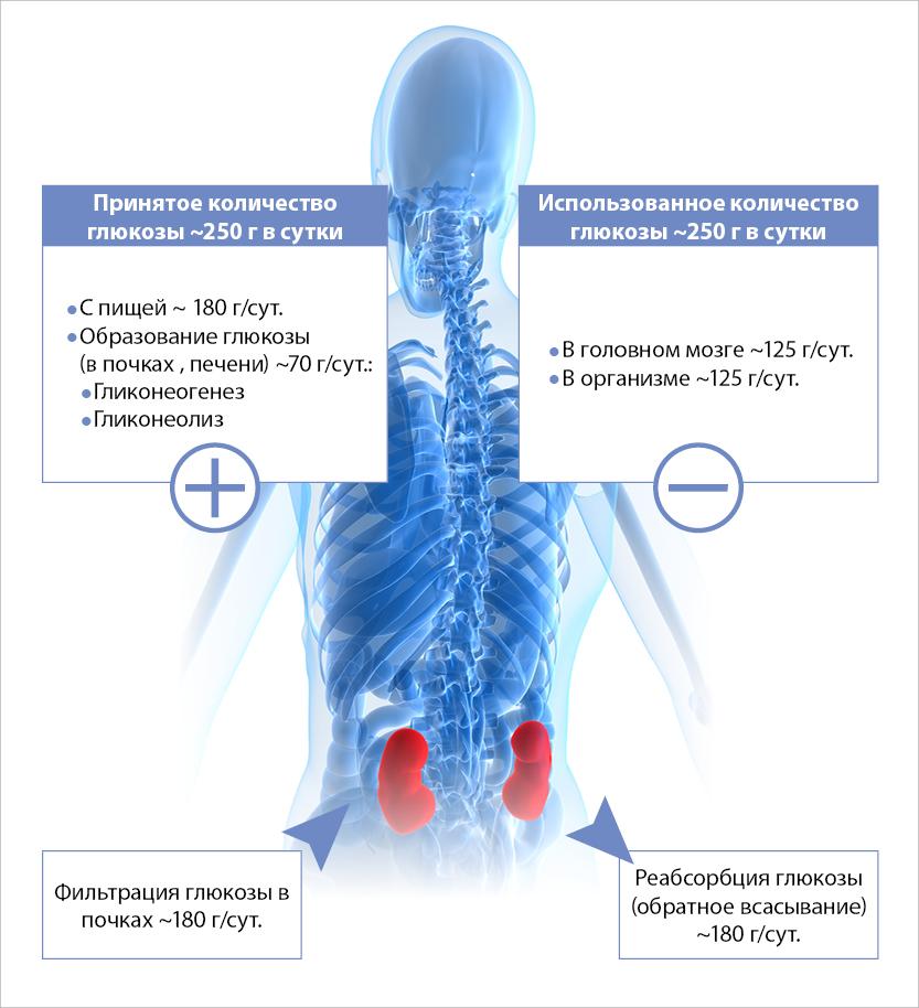 rudens-2014-homeostaze-ru