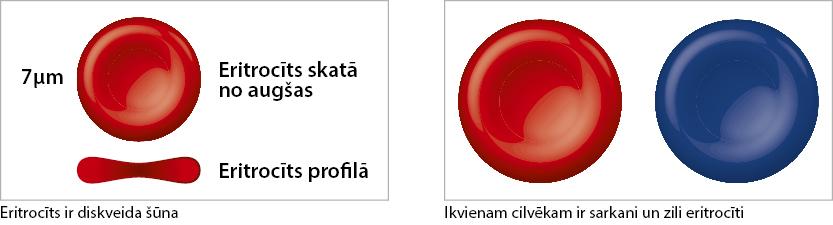 rudens-2015-eritrociti-lv