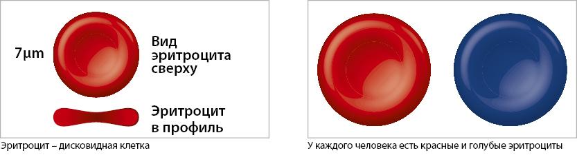 rudens-2015-eritrociti-ru